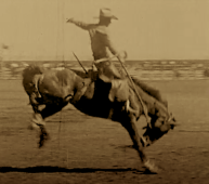Old movie bronc